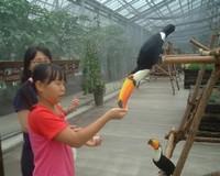 Bird_mini