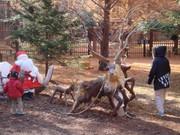 Forestpark_mini